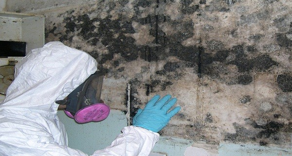 fort-lauderdale-mold-removal