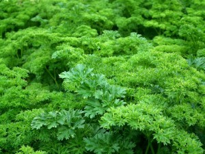 parsley-261039_960_720
