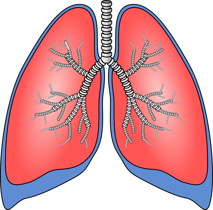 lungs-154282_960_720